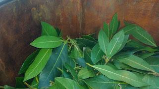 Laurier distillation cuivre feuilles artisanat