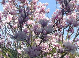 Ein ewig neues Wunder: Blüten im Frühling