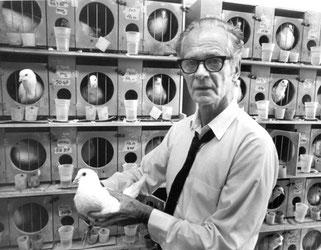 """Resultado de imagen para palomas supersticioas"""""""