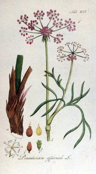 Zeichnung: Adolphus Ypey (1813)
