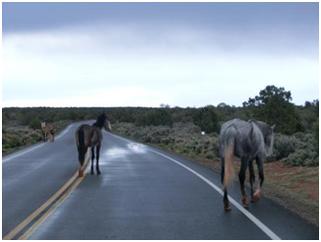 Mustangs auf der Fahrbahn