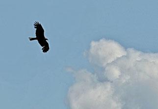 26. Mai 2014 - Wer nicht vom Fliegen träumt, dem wachsen keine Flügel (Robert Lerch, Buchtitel)