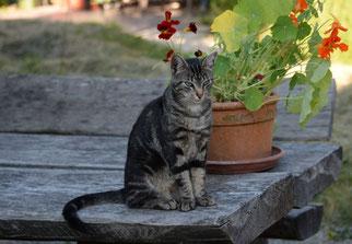 28. Juni 2014 - Sillleben - Katze mit Blumen