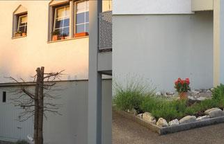 12. Juni 2014 - Natur vor dem Fenster, Teil 2 (links - 13.03.2012 - rechts -12.06.2014) Wenn Natur die Sicht einschränkt !