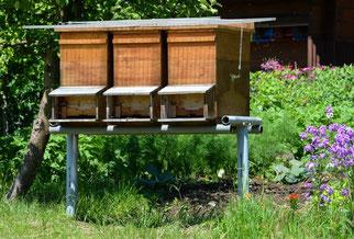 25. Mai 2014 - Auch die Bienen haben kalt