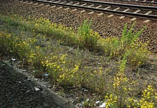 23. Juni 2014 - Auf dem Bahndamm