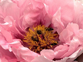 02. Mai 2014 - Biene gib mit deinen Honig!