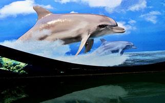 """16. SFebruar 2014 - Schiffsbemalung: """"Delphine lehren uns durch ihre gute Laune, dass wir Menschen das Leben viel zu ernst nehmen"""" (Horace Dobbs)"""