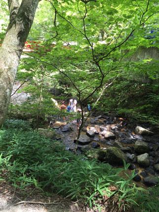 岩屋堂の奥のほうは自然が残るワンダーランドだった!