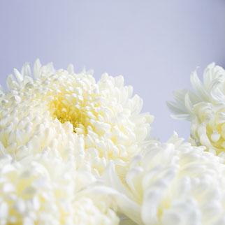今日はお花の画像をアップしたい気分…💛