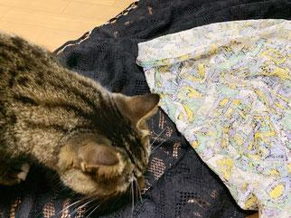 山神購入の生地2種類と飼い猫の写真