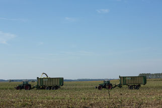 Agrarsteppe Maisacker, Foto: NABU/ Klemens Karkow