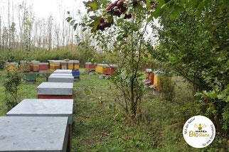 Honig Bienen Inkerei Bioprodukte Regional Bio Imker Peter