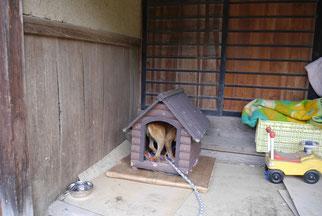 犬小屋完成~!!!