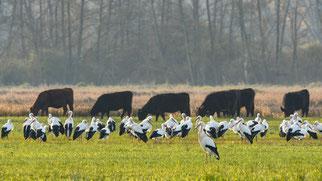 Das NABU-Schutzgebiet Bruchwiesen von Büttelborn