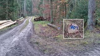 Baumstamm im Harter Wald, bereit zur Abholung - Foto: H.Fuchs