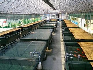 安藤養魚場の画像