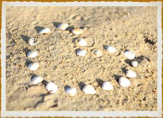 rammasser quelques coquillages le long de la place est souvent source d'inspiration