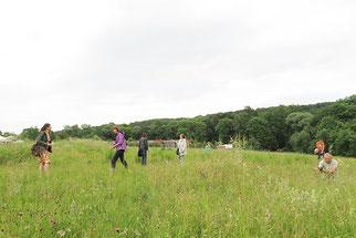 Artbestimmungen auf einer Schmetterlingswiese in Oschatz.