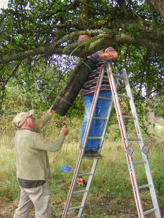 Für Steinkäuze wurden Niströhren in alten Obstbäumen angebracht (Foto Nabu Eppstein).