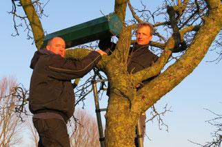 Johannes Klaassen undThomas Iwwerks beim Aufhängen einer Steinkauzröhre