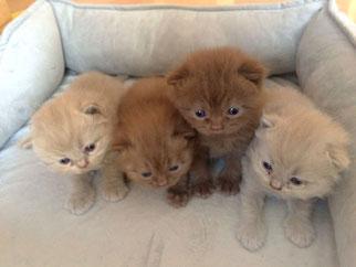 Katzen Kitten
