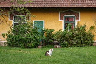 Althof - Reitstall und Bauernhof, Urlaub am Bauernhof
