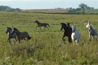 Pferde am Althof