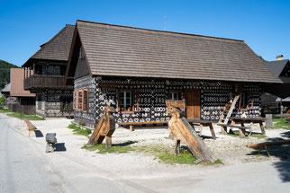 Mangrove tree at Cape Tribulation, Queensland, Australia