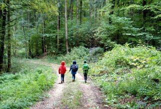 Der Wald - idealer Ort für das Abenteuer Naturgeburtstag
