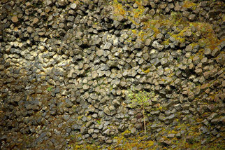 Basaltsäulen des Steinbruches. (Foto: Bernd Becker)