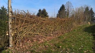 Die gleiche Hecke aus der anderen Richtung. Verflochtene Weiden- und Haselruten sorgen für Stabilität. Sie ist 1,5 Meter hoch und 50 cm breit. Links erkennt man das integrierte Tor. (Foto: Roland Steinwarz)