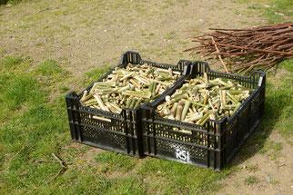 Massenweise Bambus und Schilf wurden kleingeschnitten. (Foto: Stefan Körber)