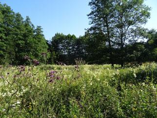 Die Wiese in voller Blüte. (Foto: Roland Steinwarz)