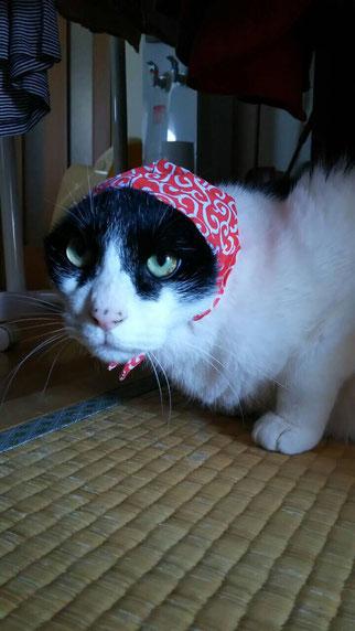 セサミ(友達のネコ)