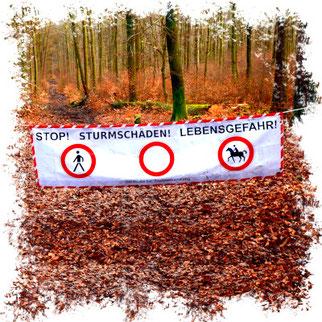 Gefahr im Wald · Foto→ Hessischer Waldbesitzerverband