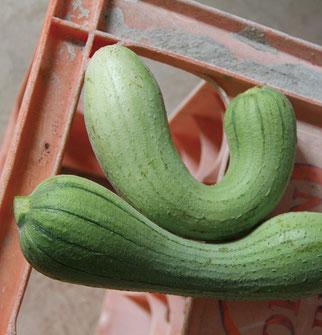 家の前のアーテイ(家庭菜園)では、季節毎に様々な野菜が育てられている