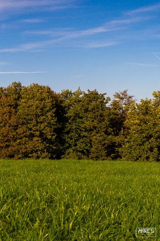 www.marcs-fotografieseite, Blog, Herbst, Wald, Wiese, Blauer Himmel, Diegelsberg, Marc, Fotografie,