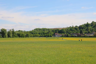Blühende Flächen im Wiesental (Foto: B. Budig)