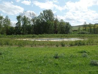An der Pfrimm ist nun sogar Platz für Auwald, Stillwassertümpel und Flutmulden. Sie bilden neue Refugien für Fauna und Flora und dienen dem Hochwasserrückhalt.