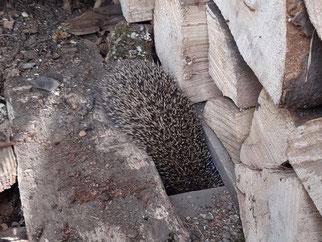 Schwupps - und kopfüber ins geschützte Nest. Foto: Tobias Mayer