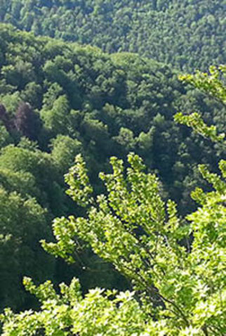 Blick vom Rossfeld. Foto: NABU Metzingen