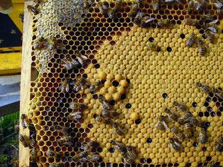 honingraat met deels gesloten raten