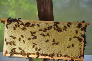 Honingraat met gesloten raten