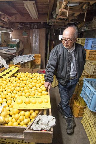 湘南ゴールドは毎年3月上旬頃までに収穫され、一定期間貯蔵されてから出荷となる。販売は主に4月中旬頃まで。上品な甘さ、華やか&さわやかな香りが特徴の神奈川を代表する柑橘。
