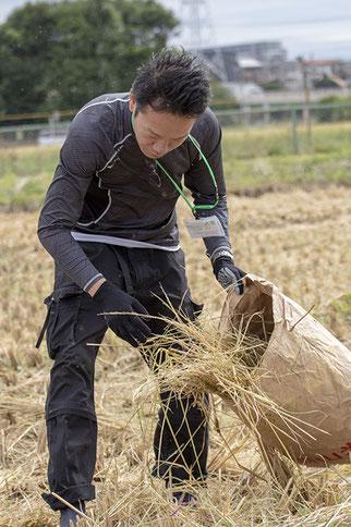 亀の尾の田んぼで藁を集める三浦さん。その姿からは、「お客さんを喜ばせたい」という気持ちが伝わってきた。