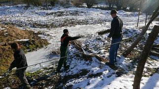 NABU-Gruppe beim Kopfweiden schneiteln