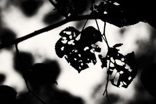 Die dunkle Seite des Herbstes. Michael Rüffer