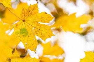 Die helle Seite des Herbstes. Michael Rüffer