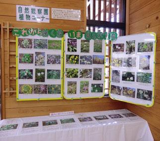 ●中に入ると、野川公園で見られる植物や野鳥を説明した展示がありました